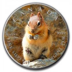 2016 1 Oz Squirrel Antique Maple Leaf